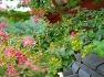 서산서원의 배롱나무꽃