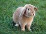 12지지 동물 중에 토끼(卯), 산토끼 등에 관한 꿈