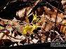 매화,진달래 꽃도 봄이면 핀다.