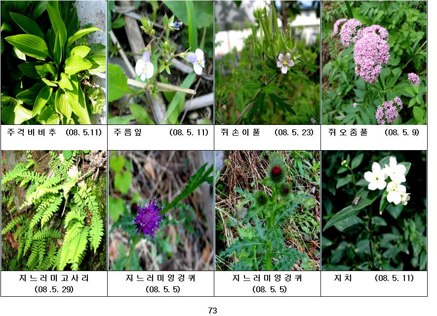 봄에 피는 야생화(5월-19)