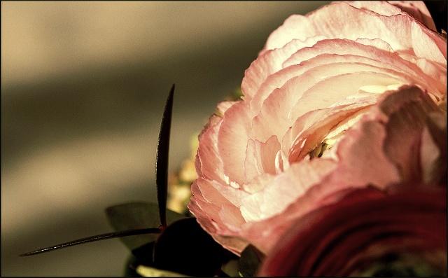 《玫瑰》丹妮尔卡丽 - 空山鸟语 - 月滿江南